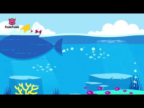 baby-shark-lagu