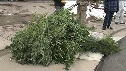 Suspected illegal marijuana grow houses raided in Denver metro area