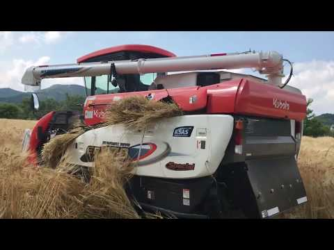 Amazing New Rice Harvester  Kubota Er470 #barley #harvest #japanamazingmachine