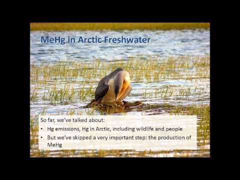 Global Action, Local Impact: Mercury Contamination in Arctic Ecosystems