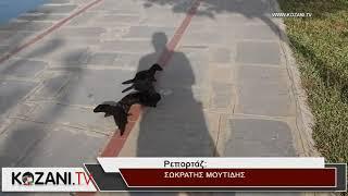 Ανεξέλεγκτος ο πληθυσμός των μινγκ στην Καστοριά