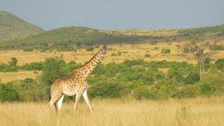 DJI – A Flying Safari