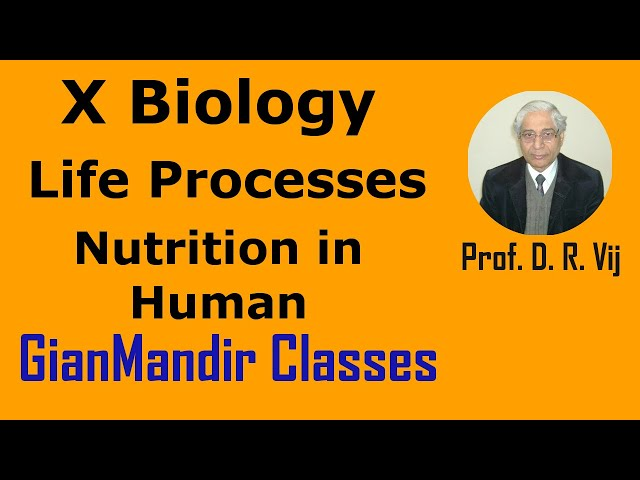 X Biology - Life Processes - Nutrition in Human by Manjit Mam