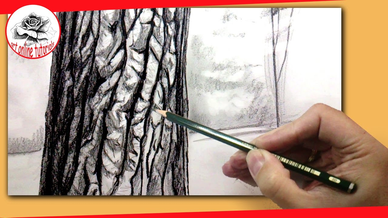 How To Draw A Realistic Tree With Pencil How To Draw