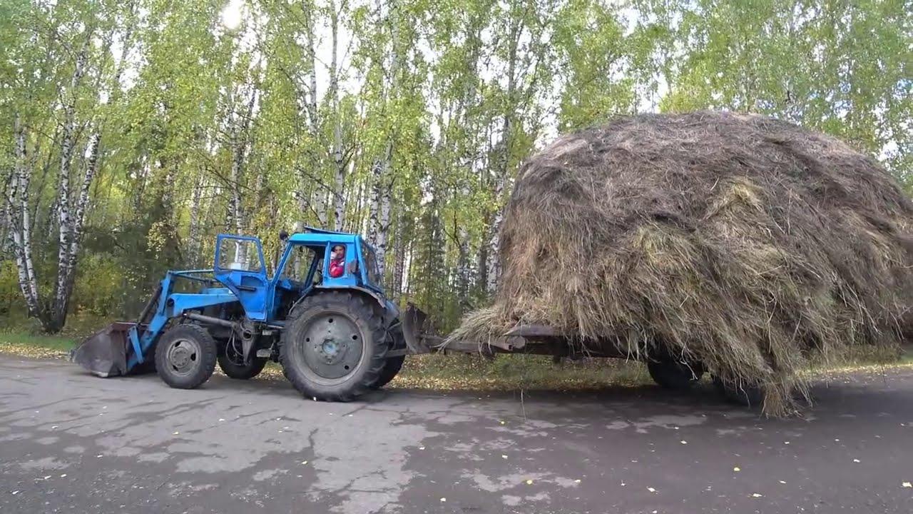 Лисинцы возят сено.