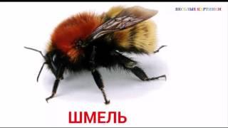 Картинки для Детей. Изучаем насекомых