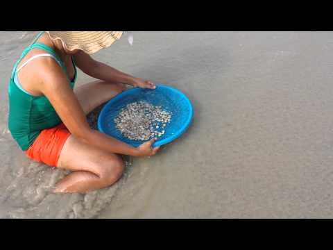 Clamming in Phuket