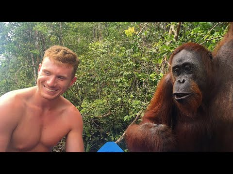 SLAPPED BY AN ORANGUTAN!!!👋🏻🙊😂