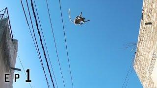 Langur monkeys jump massive roofgap! 🇮🇳