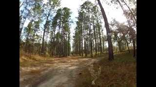 Exploring in Citrus Wildlife Management Area (Searching for the Ghost Town of Landrum)