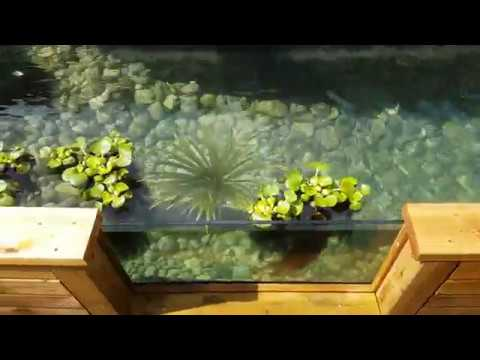 Koi pond with glass viewing window and waterfall youtube for Koi pond window