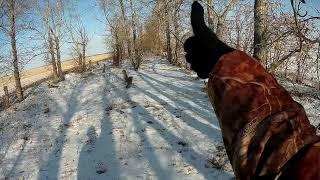 Охота на зайца 2017-18г.  Три зайца с одной посадки!!!