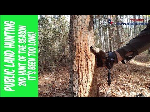2nd Hunt In Sam Houston Nation Forest & Huge Buck Rub
