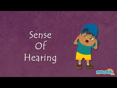 Sense of Hearing - How the Body Works | Science for Kids | Kids Education by Mocomi Kids