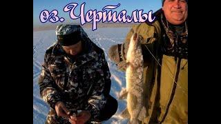 Окунёк как из пулемёта зимняя рыбалка 2020 на озере Черталы щука на жерлицу
