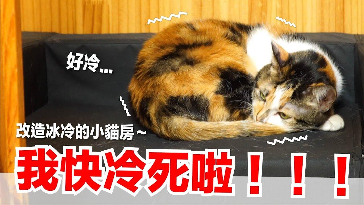 【好味小姐】我快冷死啦!改造冰冷的小貓房~ 好味貓日常EP95