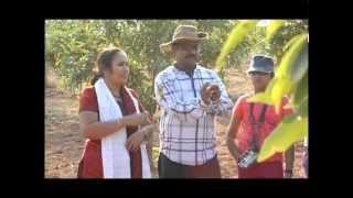 AR4 Organic Mango Farms on Zee News.mp4