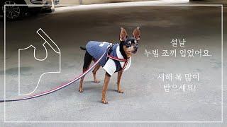 강아지옷 만들기 생활한복 연봉매듭으로 장식한 누빔 조끼…