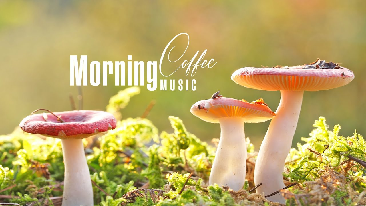 Morning Relaxing Music: Coffee Music, Romantic Piano Love Songs, Soft Peaceful Birds Singing
