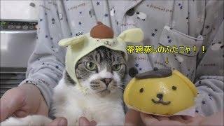 今日は猫の日を祝って 午後10:30頃よりライブをしますので、是非見に来...