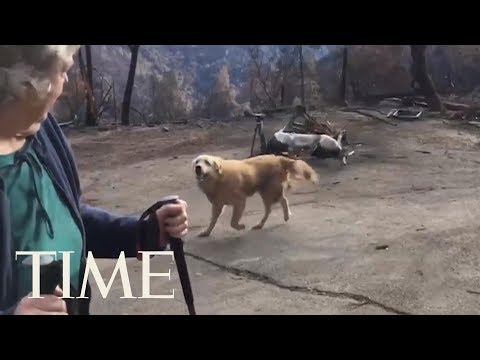 Couple Returns To Home Lost In California's Camp Fire To Find Their Dog Waiting For Them   TIME