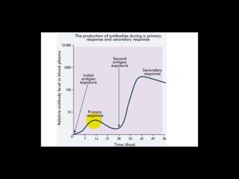 Immune Response Graph