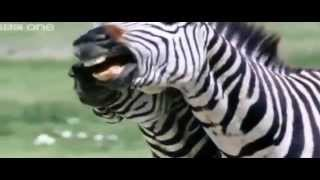 Hilarious Animal VoiceOver BBC