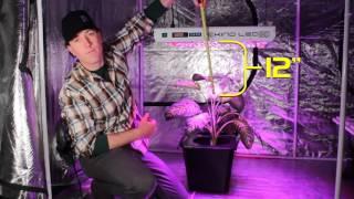 SHG: KIND LED Işık yüksekliği