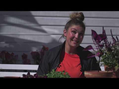 Plantera plantor till skogsträdgården , skola om palettbladssticklingar i Hemma hos Jessica v 21