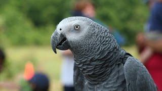Попугай жако григорий разговаривает