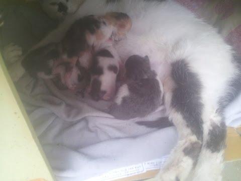 임신한 길고양이한테 간택당했다. (feat.동물이 가족이되는 과정)