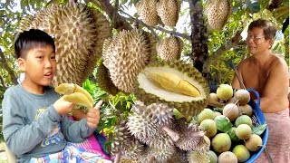 Durian Monthong from Koh Kong Province | Durian Season in Cambodia