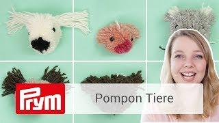Video: Kit pon pon gatto Mimi
