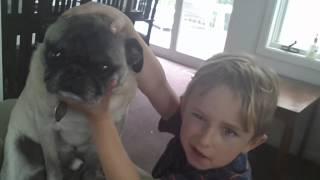 Ugly Pug