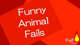 Funny Animal Fails!