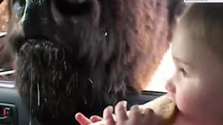 Funny Baby Video Funny Baby Plays At The Zoo Part 2 Funny Baby Video