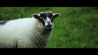 The sheep stories. Enduro cycling in Lake District, England.