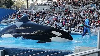 Las orcas en SeaWorld