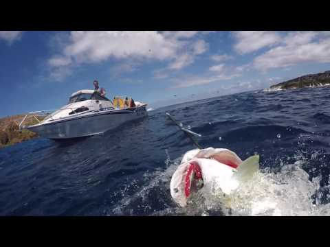 Half day boat, half day rock hop, spearfishing Norfolk Island...