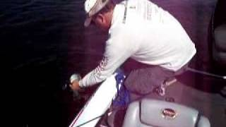 Orlando/Disney area-Lake Toho Bass Fishing: Releasing Florida bass