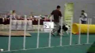 Obedience Dog Show