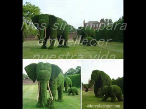 Plantas con flores y sin youtube for Nombres d plantas ornamentales