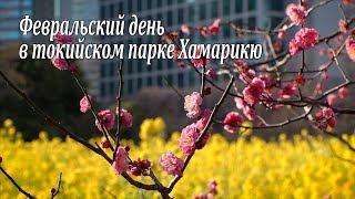 Февральский день в токийском парке Хамарикю / February in Hamarikyu Park in Tokyo