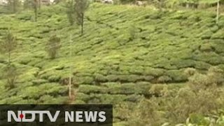 As Munnar women continue protests, tough times ahead, say tea estates