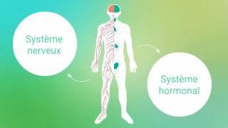 1-TUTO-FORMATION GESTION DU STRESS Comprendre les mécanismes du stress - Institut François Bocquet