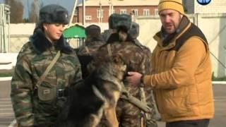 Планета собак 2011 - Восточно-европейская овчарка. Смоленская область, г. Вязьма(Дорогие друзья. Вашему вниманию - очень интересный цикл передач