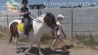 Конные прогулки: Кривой Рог, отзывы (