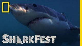 Gauntlet of Sharks | SharkFest