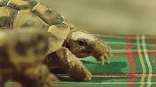 Romantyczne żółwie ninja | Allegro | Konkurs Papaya Young Directors 2016