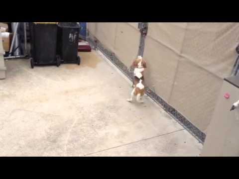 Dog cruelty in Chelsea Victoria